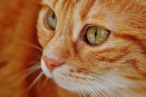 Le chat, un animal de compagnie apportant énormément de bonheur