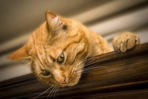 Comment faire sentir à votre chat que vous l'aimez?
