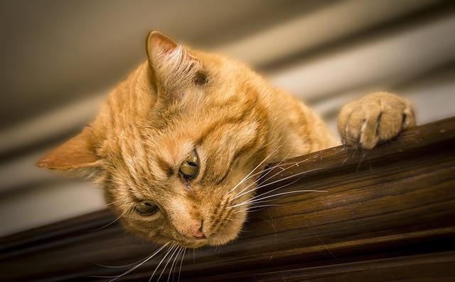 faire sentir amour chat