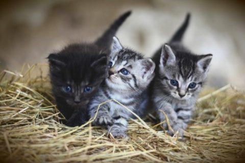 Comment choisir une litière agglomérante pour son chat ?